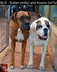 QLD - Sultan (m/6y) and Kosmo (m/7y)