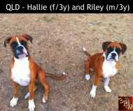 QLD - Hallie and Riley