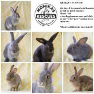 RESCUE a bunny instead of buying from PETSHOP