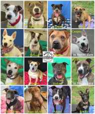 STAFFIES at DoggieRescue